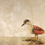 Doomtree - False Hopes CD